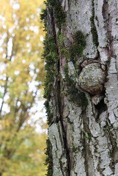 Texture Tree by Pep Talk Polly, via Flickr