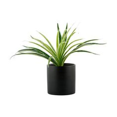 Crawler Plants And Cats: Why Are Cats Eating Spider Plant Leaves And Can It Be Harmful? Pink Side Plates, Harmful Plants, Faux Grass, Touch Lamp, Pet Fish, Garden Gazebo, Spider Plants, Planted Aquarium, New Home Designs