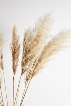 European Men, Fields Of Gold, Less Is More, Pampas Grass, How To Preserve Flowers, Neutral Tones, Table Centerpieces, Ideal Home, Picture Show