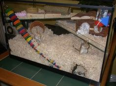 The Cage Housing There are a number of good choices for your new gerbils home. Hampster Cage, Gerbil Cages, Bunny Cages, Hamster Live, Hamster House, Hamster Stuff, Hamster Ideas, Teddy Hamster, Animal Snacks