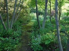 Moss Pathway, Paw Paws Rick Darke LLC Landenberg, PA