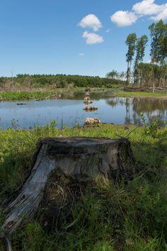 Het natuur- en recreatiegebied Broekpolder beslaat een kwart van het Vlaardings grondgebied. Hier kun je wandelen, fietsen, spelen, paardrijden en watersporten. Verder vind je hier allerlei sportverenigingen en de scouting. Vanuit de Broekpolder kun je de rest van het Midden-Delflandgebied verkennen.  In de Broekpolder vind je onder andere De Ruigte, een natuurgebied met open plekken, ruimte voor water, een gevarieerde begroeiing en een kudde Schotse Hooglanders.