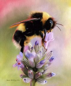 Bumble bee oil painting by Sarah Stribbling Wildlife Art Wildlife Paintings, Wildlife Art, Oil Paintings, Bee Pictures, Bee Drawing, Bee Painting, I Love Bees, Creation Photo, Cute Bee