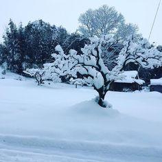 今朝の工場前  #積雪  #雪  #滋賀  #滋賀県  #日野町  #積雪30cm  #積雪40センチ  #長靴  #長靴必須  #スノーブーツ