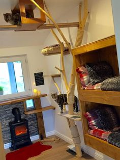 A cat hotel in England is the definition of luxury