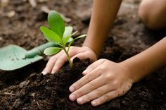 (Natural News) A court in Florida has decided that homeowners do not, in fact, have the right to garden on their own property. While the court says flower gardens and fruit trees are acceptable hor… Fruit Trees, Trees To Plant, Tree Planting, Organic Farming, Organic Gardening, Compost, City Farm, Natural News, Grow Your Own Food