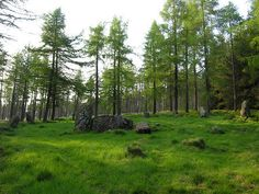 The Nine Stanes Circle in its Woodland Setting