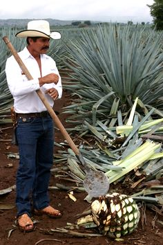 A jimador is a type of Mexican farmer who harvests agave plants, which have been traditionally harvested primarily for the production of mezcal and tequila.