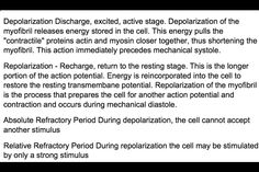 Depolarization / Repolarization / Absolute Refractory Period / Relative Refractory Period