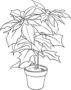 Poinsettia Or Christmas Flower Coloring Page From Category Select 28148 Printable Crafts Of Cartoons Nature Animals Bible And Many More