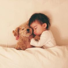 Good friend combination ♡ Suyasuya Sleeping baby and cuteness of toy poodle are talked about - Animals World Puppy Cuddles, Pet Puppy, Pet Dogs, Animals For Kids, Cute Baby Animals, Animals And Pets, Yorkie Poodle, Poodles, Pet Shop
