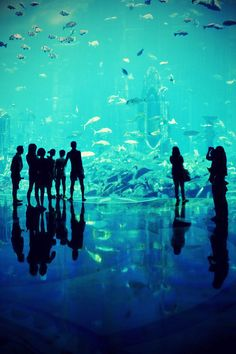 The Atlantis - Dubai by Federico Ravassard.    I chose this photo because I loved the shades of blue in it, and how you can only see the outline of the people in it. It also looks as if they are inside the fish tank.