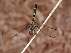 A beautiful dragonfly in our garden.