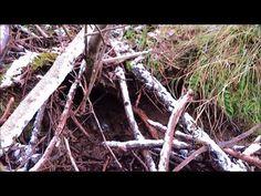 Keila jõgi, Metsanurme - Üksnurme ajaloo- ja loodusõpperada - YouTube Nature Gif, Youtube, Videos, Plants, Plant, Youtubers, Youtube Movies, Planets