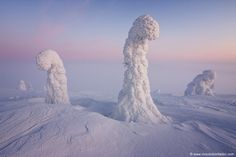 """Trees covered in snow create a surreal arctic landscape from the FInnish Lapland as the Belt of Venus stretches in the background."""