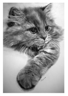 Cat 9 by Paul Lung (Graphite pencil)