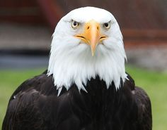 So You're Balding, What Are You Gonna Do About It? And The Emotional Phases Of Hair Loss #baldguyde #bald #hairloss #balding #phases #emotionalphases #hairlossphases #shaving #shave #tips #help #baldeagle