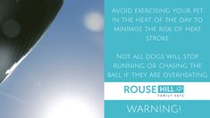 Avoid exercising your pet in the heat of day to minimise the risk of heatstroke