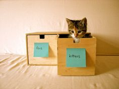 Organizing kitties!