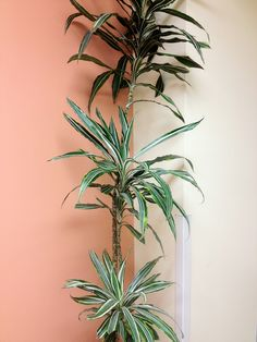 I think plants look amazing  on a pink background!