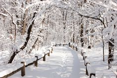 New Yor Botanical Garden