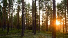 the midnight sun, Sweden...24 hrs of sunlight