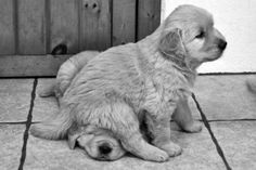 dogs, puppy animals, Black and White Photography