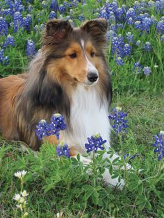 Spring's the best time of year to just lay in the flowers, not a care in the world.