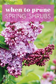 Take the mystery out of when to prune your plants. Many trees, shrubs, and perennials can produce more blooms and stronger growth if you trim them at certain points during the year. Pruning Shrubs, Flowering Shrubs, Boxwood Garden, Lush Garden, Growing Flowers, Planting Flowers, Flower Gardening, Gardening Tips, Beauty Bush