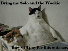 combination of the 2 greatest things ever: star wars and lolcatz