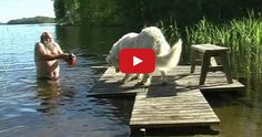 Man Foolishly Tries to Bathe 200 lb. Dog in Lake. What Happens Is Hilarious!