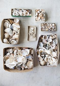organized seashells