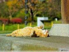 Orange tabby cat basking in the sun