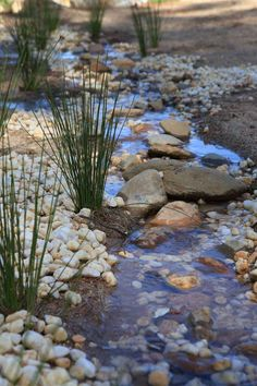 Beautiful Bio swale Dry creek bed concept areas of larger stone act as bridges