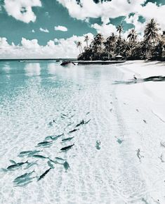 Virgin island - Holiday - Vacation - worlds nice places - Travel Photography Beach, Travel Photography, Places To Travel, Places To Visit, Travel Destinations, Beach Aesthetic, Travel Aesthetic, The Beach, Summer Beach