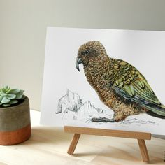 The Kea is the latest addition to the illustrated New Zealand native bird series, available in A4 and A3 and custom sizes on request.