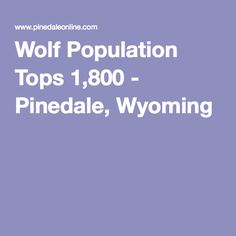 Wolf Population Tops 1,800 - Pinedale, Wyoming