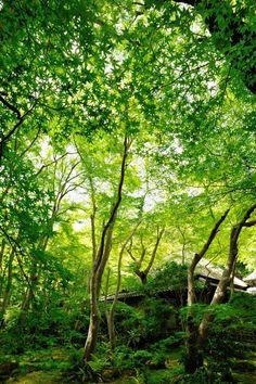 Giou-ji Temple, Kyoto, Japan 青紅葉 #緑 #Green #Kyoto