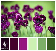 Purple Poppy: Purple, Mauve, Plum, Cerise, Green, Fern, Pastel - Colour Inspiration Pallet