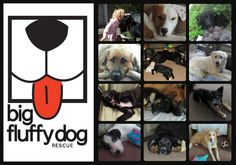 Here are most of the 17 dogs we have fostered since we started in April of 2013.  Brinkley, Bart, Redmond (aka Lil' Bear) James, Droopy/Harry/Hogan, Gabby Malcolm, Kim (with our dog, Coco), Huckle Frannie, Khloe, Honey