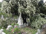 Double-flowering Lady Banks rose is vanilla-scented.  Sacramento Old City Cemetary-Historic Rose Garden