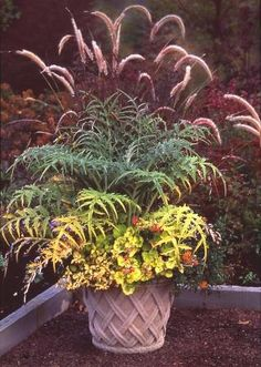 My HOCD-horticultural obsessive compulsive disorder--kicks into high gear when it comes to containers. I use more than 100 in my garden. I have hordes of mixed containers -those planted with a riot...