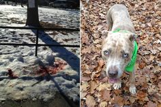 A Brooklyn cop shot a pit bull when it charged him while he was slapping its female owner with a summons, police said Monday — but the distraught woman claims her dog never attacked anyone an…