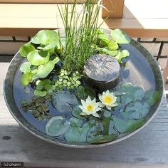 Beautiful collection of different aquatic plants in a low water bowl. See more great ideas @ www.ContainerWaterGardens.net #WaterGardening