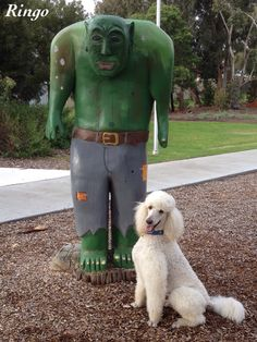 Ringo: I'm not scared of this funny looking green man!