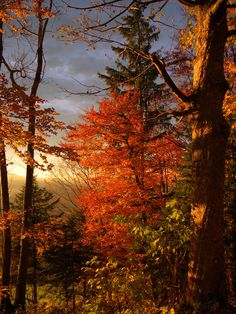 red autumn by ~MadMike27 on deviantART