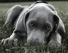 This gray is so soft and lovable... and those blues...