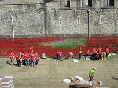 Poppies being placed by volunteers at the Tower of London.