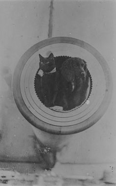 Black cat and spaniel on HMS Barham, ca. 1916 | 35 Vintage Cats At Sea