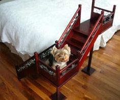 Now these are some pet steps!!